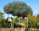 HD video arbol robinson Disney Paris