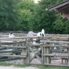 Zona animales en Davy Crockett Ranch